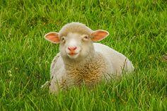 Ekologiczny wypas owiec daje dużo perspektyw. Mali dystrybutorzy załatwiają zatem zdrowe towary – mleko. Ten zapach jest niesamowity! Żadne towary z sklepów sieciowych tak nie smakują. Milusińscy, ale także rodzice są po prostu nim zachwyceni. Mleko prezentuje się niesamowicie pięknie i ma naprawdę sporo kalorii wartościowych. Te w szklanych pudłach są beznadziejne, właśnie aktualnie sobie to wytłumaczyliśmy.