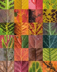 Some of the leaves captured last autumn to show their beautiful structures and colors. So much beauty and color in nature!  by Sepia