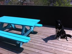 Painted Picnic Table For Backyard | If I Decorated... | Pinterest | Painted Picnic  Tables, Picnic Tables And Picnics