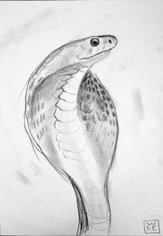 Buy Cobra, Pencil drawing by Will Eskridge on Artfinder. #cobra #snake #drawing #wildlifeart #buyartnotanimals #graphite