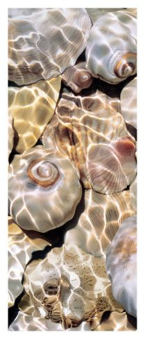 shells underwater love the ocean and everything that goes along with it !