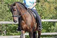 Wir zeigen Übungen für Beginner, aber auch Fortgeschrittene. Was Sie beachten müssen, finden Sie hier in der Bildergalerie. Horses, Animals, Dressage Horses, Horse And Rider, Pictures, Health, Round Round, Animales, Animaux