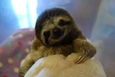 <3 | Meet Lunita, The Cutest Baby Sloth On Planet Earth