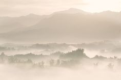 Golden Misty Valley - A landscape shot of a bamboo valley filled with mist at daybreak with rising sun shining on top of the mountain ridge.