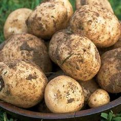 Potatoes: A Growing Guide  Practical and fun, growing potatoes is its own reward.