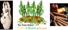Three Sisters Garden - an ancient method of gardening using an intercropping system which grows corn, beans, and squash crops simultaneously in the same growing area. From The Garden Web. Companion Gardening, Gardening Tips, Vegetable Gardening, Growing Tomatoes In Containers, Growing Vegetables, Vegetables Garden, Three Sisters, My Secret Garden, Edible Garden