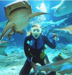 Go scuba diving with sharks