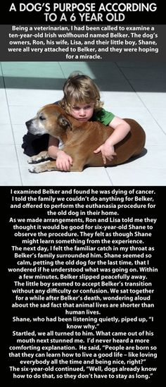 I've heard this story before, but it still makes me a bit sniffly. No, that isn't a wolfhound in the picture.