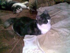 tumtum(female).. the one sleeping over there at the back is Ketty(sherazy female)