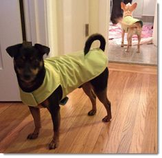 Make you pets clothes from old sweaters  http://www.frugal-cafe.com/pets/articles/diy-how-to-make-dog-clothes-fashions-recycled-clothing.html