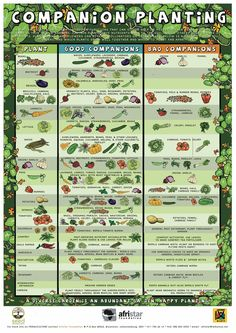 Companion Planting Chart by Afristar Foundation