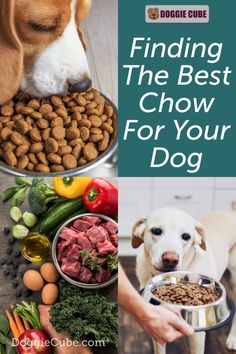 Many dog owners would like to provide the best food they possibly can for their dogs. However, with so many different types of dog food available in the market, it is not easy to decide on which is the best one for your dog. Here are some tips. #dogfood #dognutrition #dogdiet