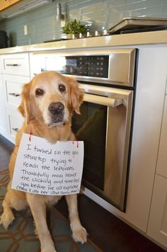 I turned on the gas stovetop trying to reach the leftovers. Thankfully mom heard the clicking and smelled gas before we all exploded. (Then I ate her iPad.  Sorry, Mom.)     Dog shaming website is hilarious! sounds like marley... or casey!