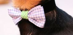 10 Easy DIY Dog Collars To Jazz Up Your Pup's Summer Wardrobe