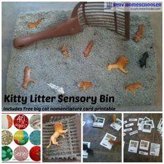 Kitty Litter Sensory Bin Filler (and free printable) from Suzy Homeschooler