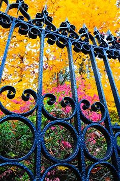 #Fall #Fence