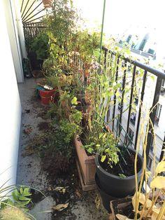 Les grandes manoeuvres sur mon balcon http://www.pariscotejardin.fr/2015/11/les-grandes-manoeuvres-sur-mon-balcon/