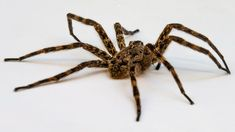 18 best insects and spiders images bugs insects hand spinning rh pinterest com