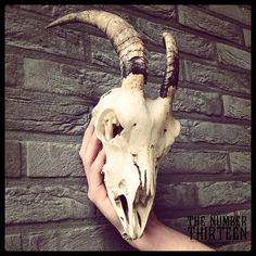 Real goat skull with lower jaw and horns. door thenumberthirteen, €63.00