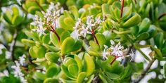 4 μυστικά για την κρασούλα Trees To Plant, Seeds, Home And Garden, Backyard, Flowers, Plants, Image, Balcony Ideas, Gardens