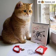 See this Instagram photo by @simonscatofficial @hosico_cat • 184 likes