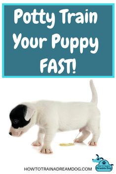 Does the idea of cleaning up another puppy piddle make you want to pull your hair out? Why can't your pup understand that going to the bathroom outside really makes you happy and going inside drives you insane? Nobody wants their house to smell like a urinal! Pin to save these 3 tips to quickly teach your puppy to potty outside!