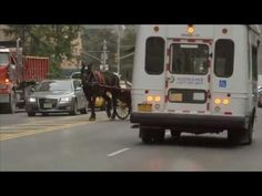 Exposing the Dangers of Cruel and Inhumane Horse-Drawn Carriages - NYCLASS