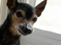 LOWENHARDT 'S FAMILY DOG - DIED ON 2009 -18.5 YEARS OLD