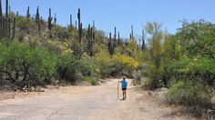 24 Things To Do With Your Kids in Tucson (before they grow up)