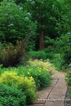 Dirt Therapy: Pam Harper's Garden