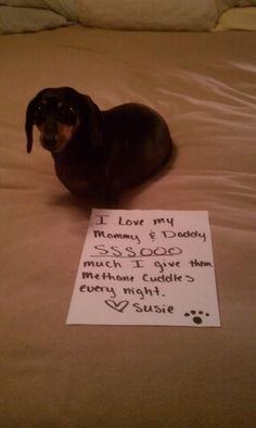 dachshund shaming 9