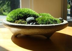 Mini moss planter - great for rooms that aren't very bright (bedrooms)