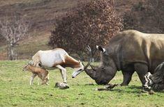 13 животных, доказывающих, что размер не имеет значения