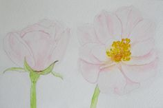Two Pale | Too Pale (watercolor) by Eentrok