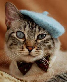 (='ᴥ'=) cat with hat