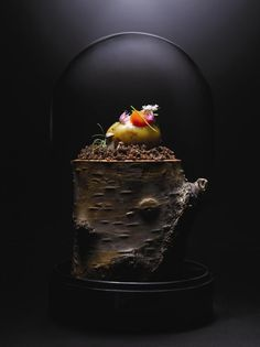 Unusual presentation at Restaurant Andre in Singapore San Pellegrino, Food Photography Styling, Food Styling, Tapas, Chefs, Restaurant Photos, Restaurant Andre, Plate Presentation, Exotic Food