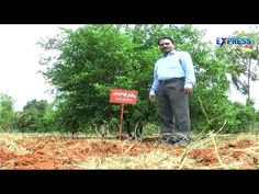 Best varieties of Lemon and cultivation tips - Express TV
