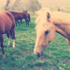 Neigh-bors, #cute, #animals