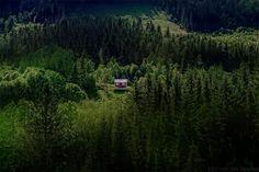Erdei ház2   Forrás: boredpanda.com - PROAKTIVdirekt Életmód magazin és hírek - proaktivdirekt.com