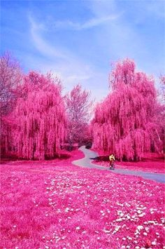 Pink Wonderland - someone likes the pink button on photoshop