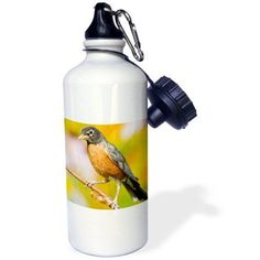 3dRose American Robin perched in flower garden, Marion, Illinois, USA., Sports Water Bottle, 21oz