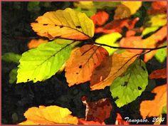 Elaborazioni grafiche - Autunno, due poesie e due immagini Ascoltai le foglie che cadevano  sul prato in silenzio... Con toni gentili e pacati, pian piano saluti la solare e profumata estate, che con grazia si allontana portando con se tutta la sua esuberan #pincopallo #autunno #estate #foglie