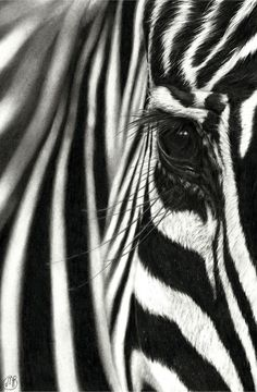 Black And White Picture Wall, Black And White Drawing, Black And White Pictures, White Art, Black White, Arte Zebra, Zebra Art, Zebra Drawing, Zebra Painting
