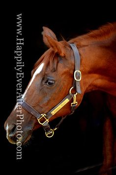 headshot of a much loved senior arabian mare  Happily Ever After 651.335.8198 http://equinephotographymn.weebly.com/
