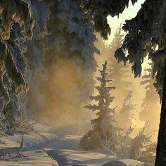 Unberührte #Schnee #Landschaft - Ein Streifzug durch den #Winter Wald