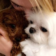 @meghan_trainor: Sista sistaaa Meghan Trainor, Instagram And Snapchat, Celebrities, Dogs, Animals, Celebs, Animales, Animaux, Pet Dogs