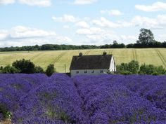 I didn't think twice when I was invited to go to this place. Firstly, Cotswolds is a stunning part of England. Secondly, visiting a lavender farm in the heart of Cotswolds Hills is certainly …