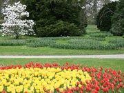 Tulip Festival Morges 2013 Tulip Festival, Excursion, Golf Courses, Garden, Flowers, Plants, Lake Geneva, Vineyard, Tulip