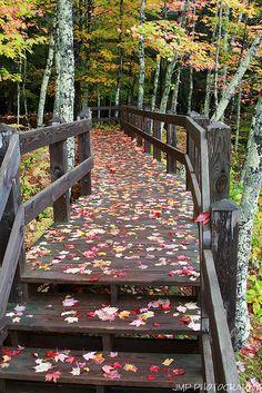 Autumn Trail, Porcupine Mountains State Park, Michigan