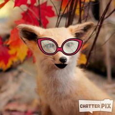 Fantastic Mr. Fox: Talking Book with #chatterpix Middle School